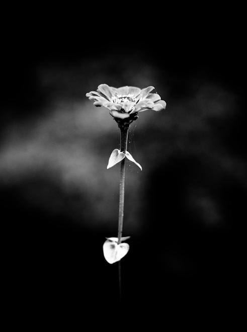 <br /> Flower