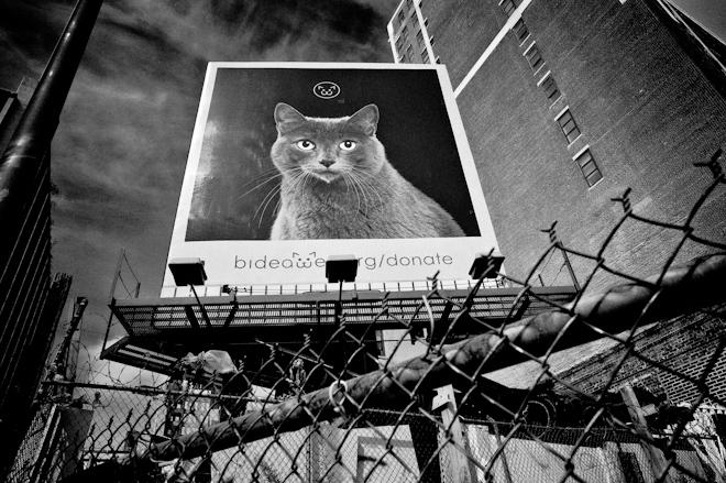 Bideawee Cat
