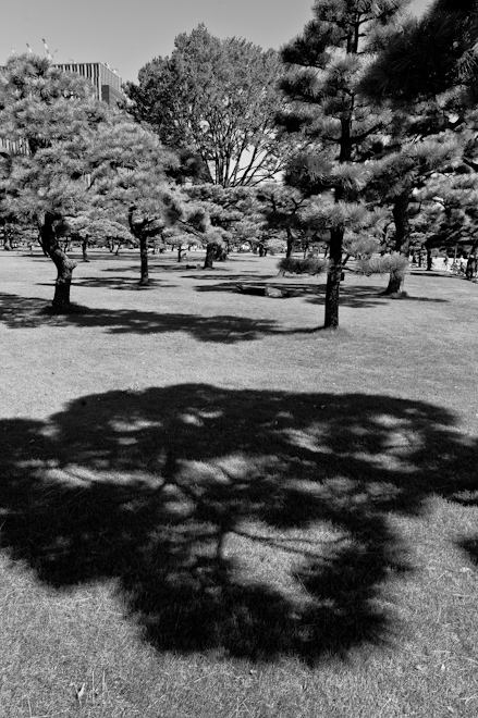 shady park near Imperial Palace